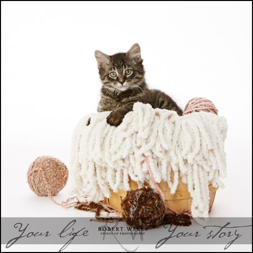 Cat-Cooper