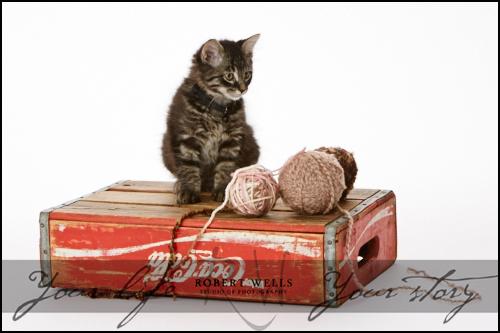 Cooper-cat