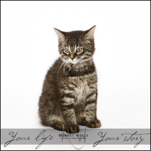 Cooper-the-cat