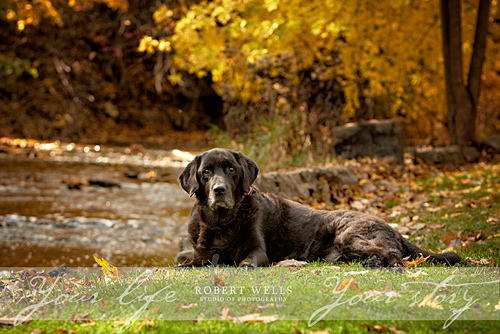 Fall-dog-portrait